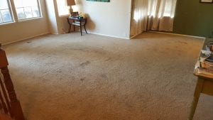 Carpet Cleaning Mather CA-95655